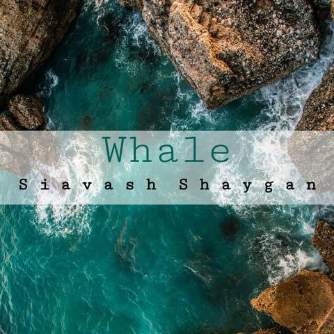 دانلود آهنگ سیاوش شایگان نهنگ